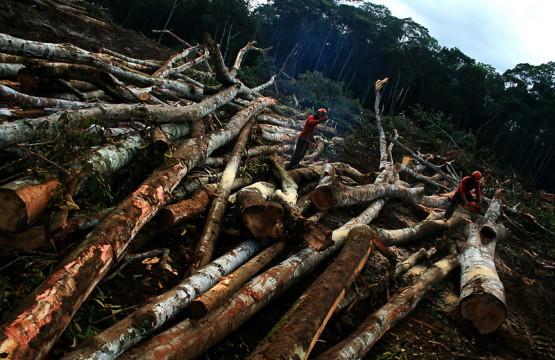 desmatamento_-_eduardo_santos_-_flickr_-_cc_0